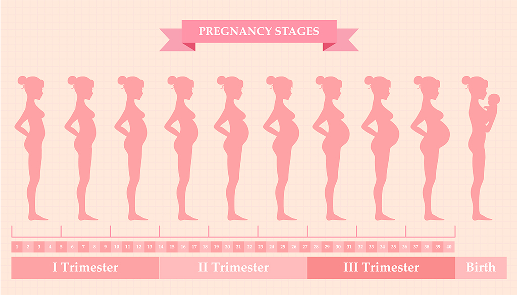 Your Pregnancy Journey. Learn how your body will change ...